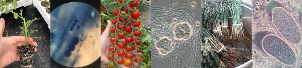 Il microbioma in frutticoltura, utilizzo in pre e post raccolta