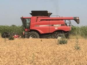 Case IH 7088, un'assiale pura per la raccolta dei cereali e del mais.