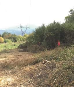 Trinciato forestale su una linea dell'Rte nel comune di Prunières vicino a La Mure (Isère). Quattro dipendenti lavoreranno lì per quasi due mesi. I residui di potatura restano sul posto oppure vengono trinciati da una cippatrice a seconda che il luogo sia di proprietà privata o pubblica.