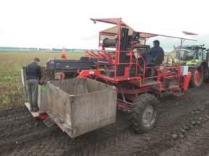 Il cantiere di raccolta dei bulbi di tulipani richiede tre operatori.