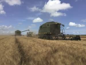 La caduta dei prezzi del grano duro rischia di compromettere anche l'attività dei contoterzisti foggiani.