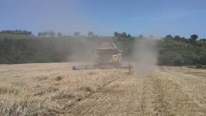 Il grano, assieme a girasole e sorgo, rappresenta il prodotto più raccolto in zona.
